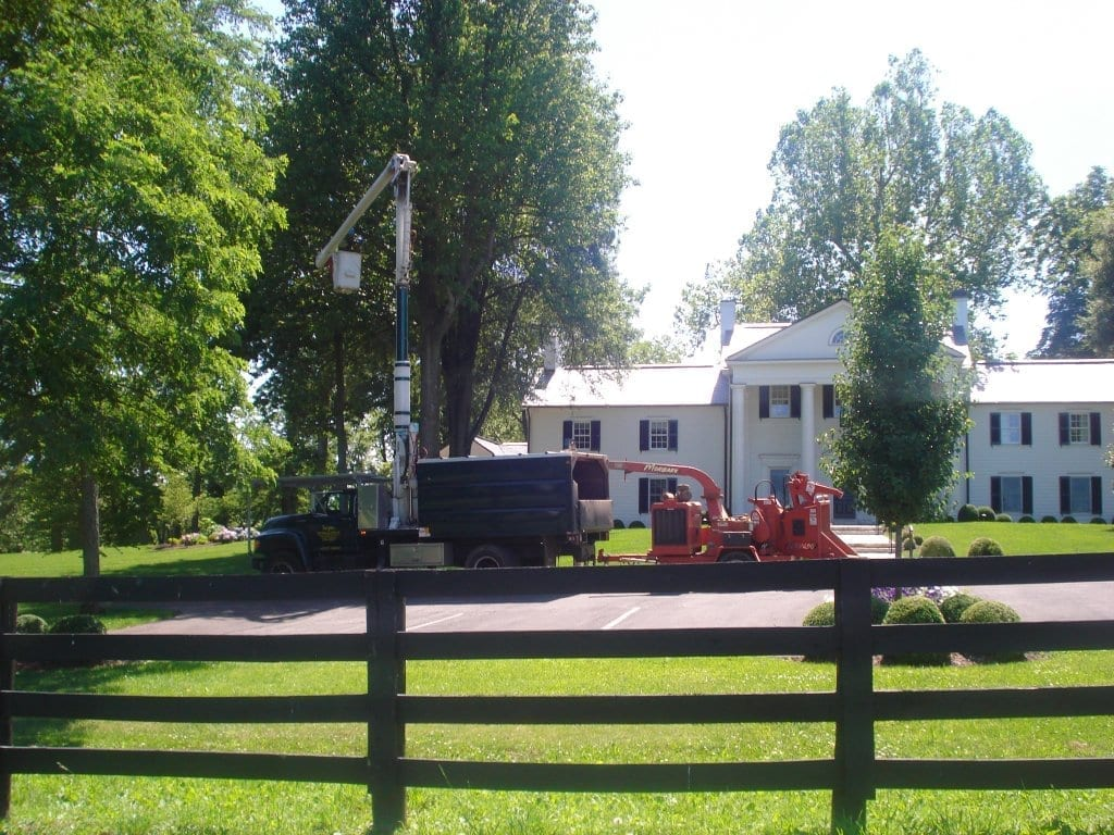 Horse Farm Tree Service | Lexington Ky