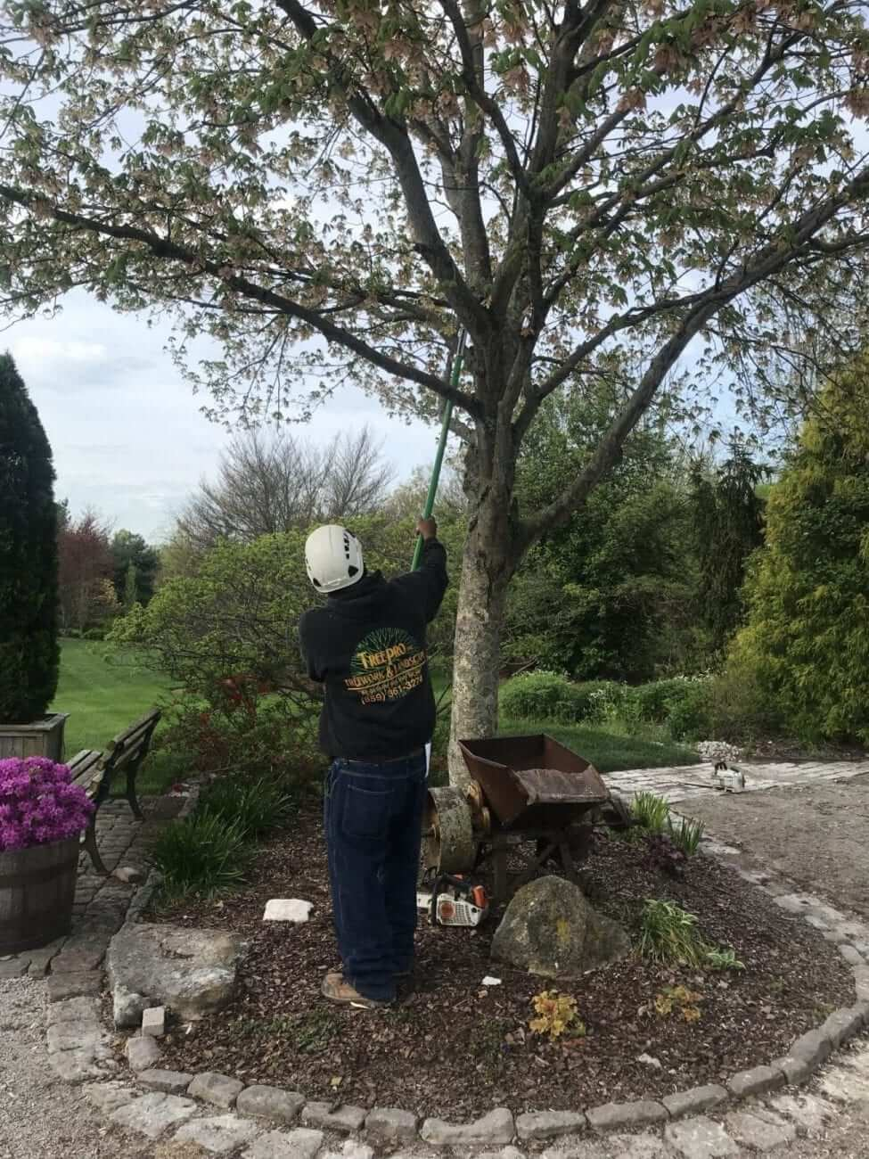 Tree trimming - Lexington KY