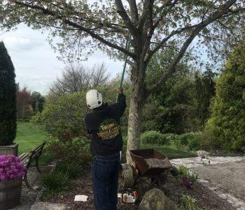 Tree Pruning/ Trimming