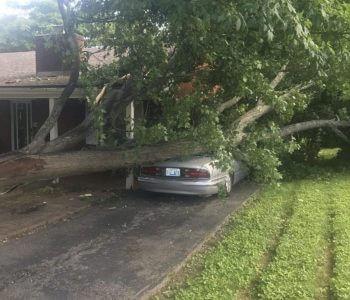 Emergency Tree Work – Storm Damage
