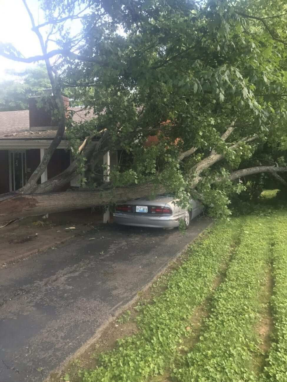 Storm Damage - Tree Services in Lexington KY