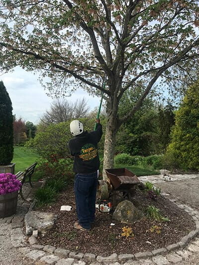 Tree Trimmer | Horse Farm Tree Contractor near Lexington KY